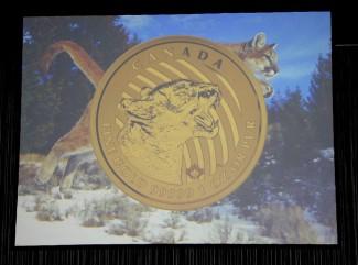 Canada-cougar-gold