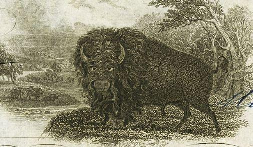buffaloClose