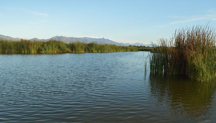 San Jose Estuary CC TheImadatterSMall