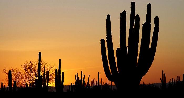 1024px-Sonoran_desert_sunset CC Tomas CastelazoSMALL