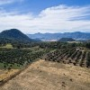 A Numismatic Tour of Mexico: Jalisco
