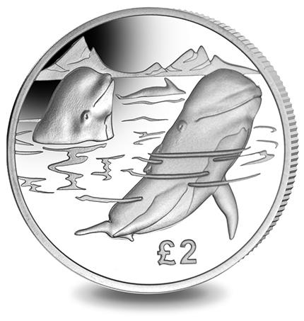 south-georgia-2017-2-whale-b