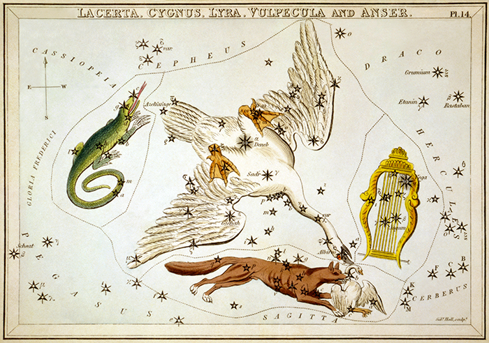 "Cygnus as depicted in ""Urania's Mirror,"" a set of constellation cards published in London c.1825. Surrounding Cygnus are Lacerta, Vulpecula and Lyra. (Library of Congress image)"